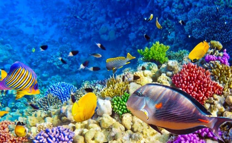 Faire de la plongée pour découvrir les fonds hawaïens