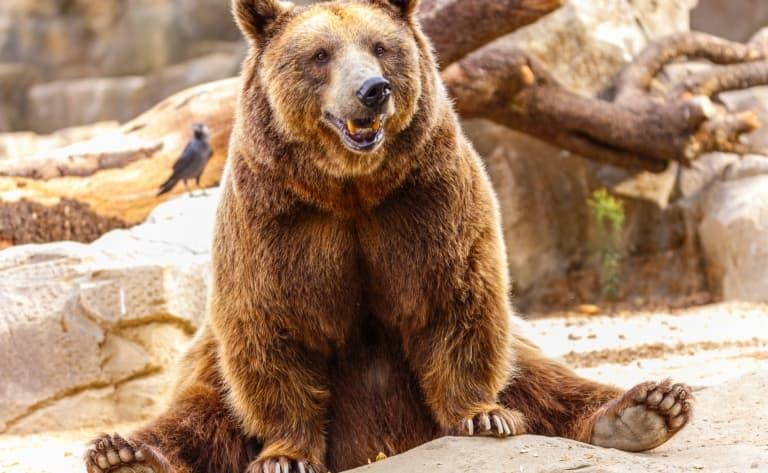 Zoo à Los Angeles
