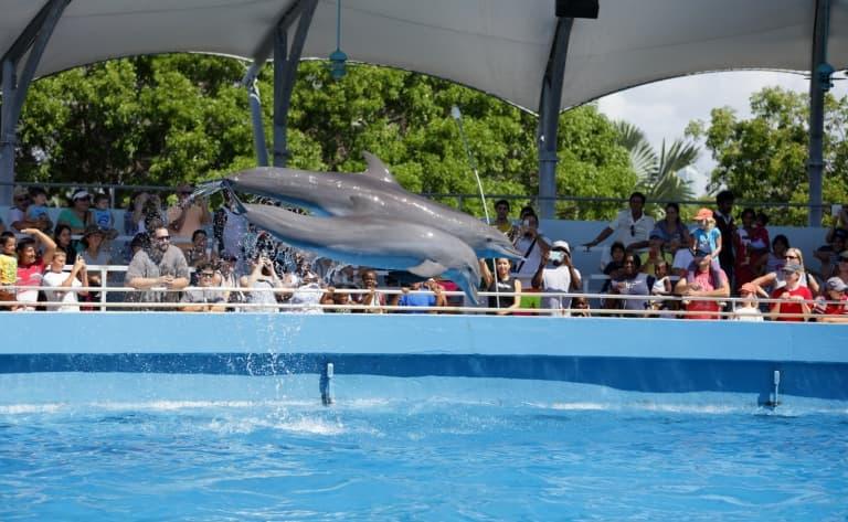 Visite du Miami Seaquarium