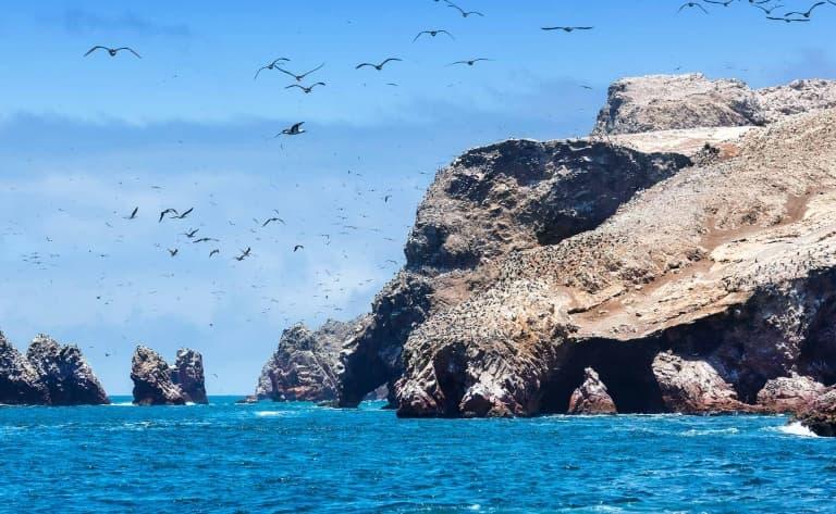 Excursion aux îles Ballestas