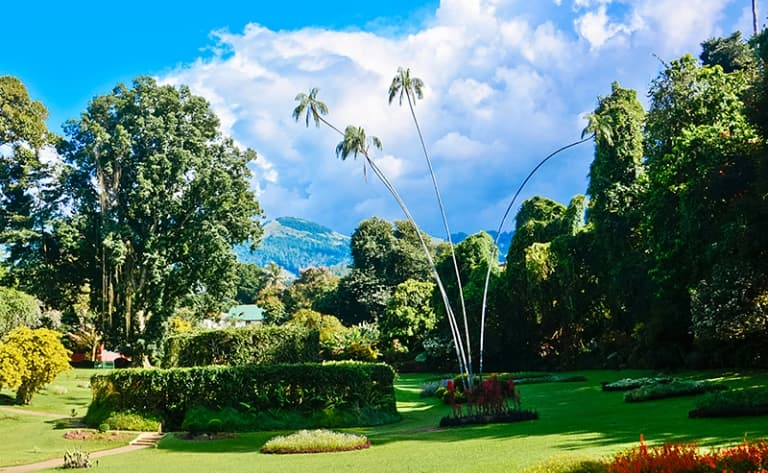 Peradeniya : le plus beau jardin botanique d'Asie !