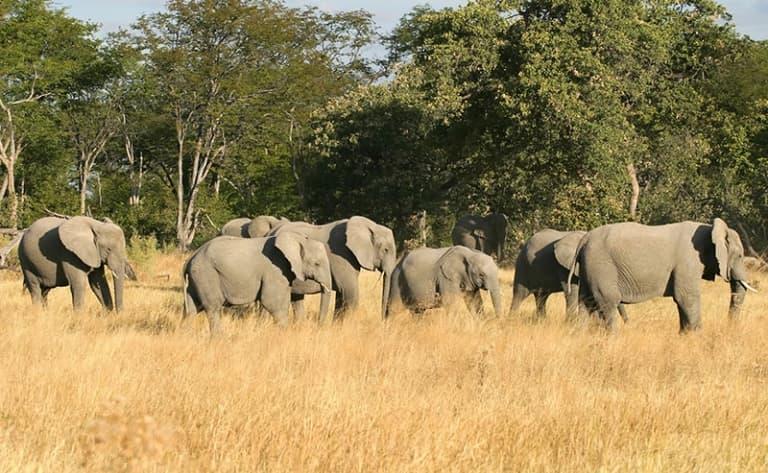 Safari au royaume des éléphants