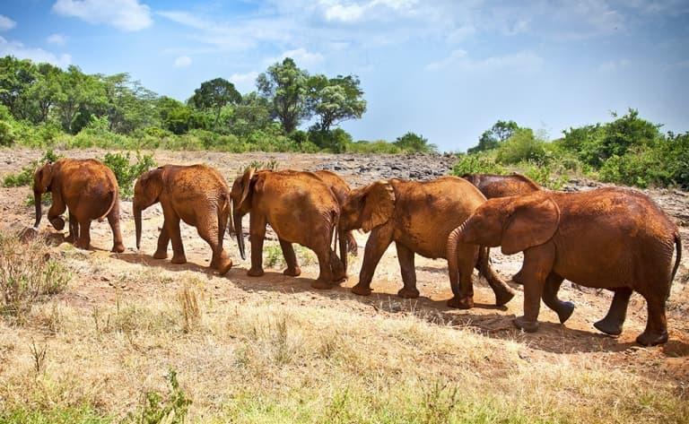 Grande journée de safari dans l'immensité de la réserve