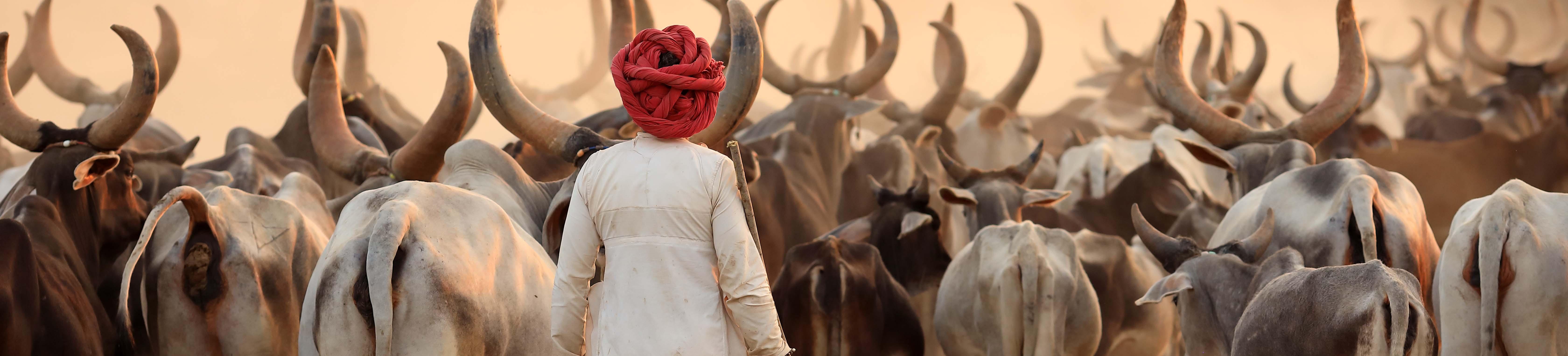 Les traditions de l'Inde et leur importance dans la vie quotidienne