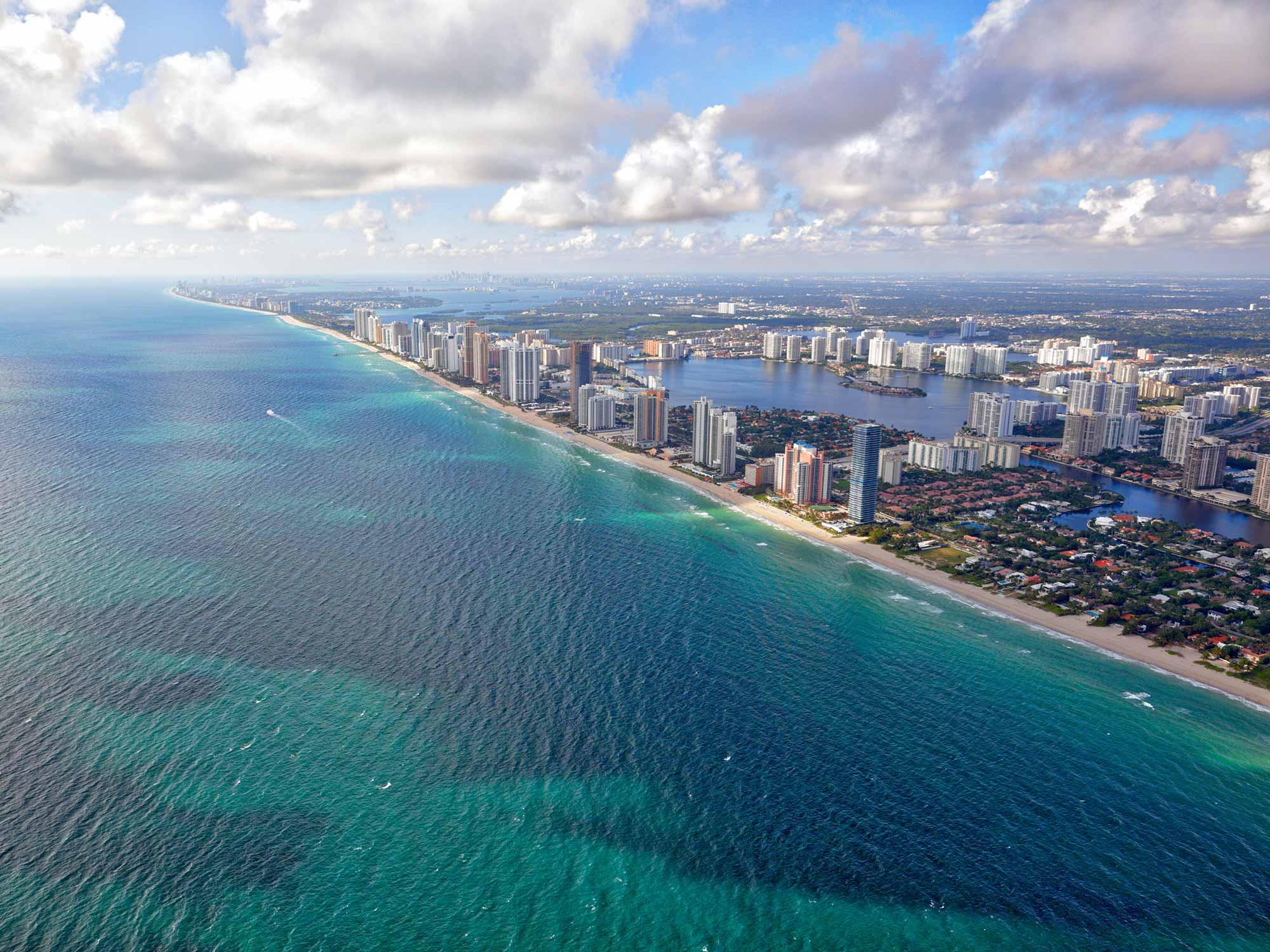 Dessine-moi un Dauphin en Floride